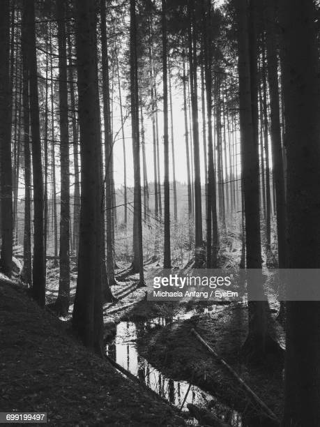 scenic view of river in forest - anfang stock pictures, royalty-free photos & images