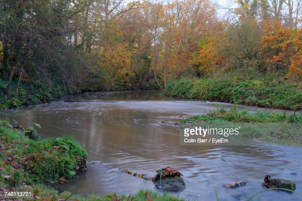 scenic view of river in forest - barr stock pictures, royalty-free photos & images