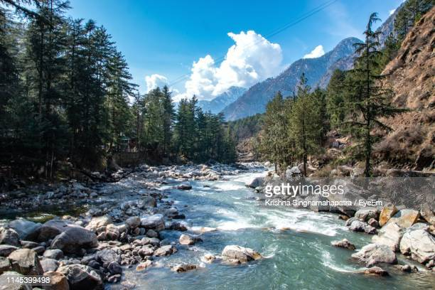 scenic view of river stream amidst trees against sky - river stock pictures, royalty-free photos & images