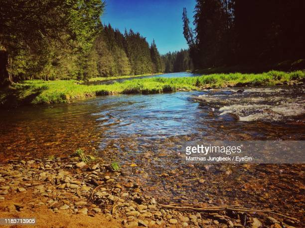 scenic view of river stream amidst trees in forest - 浅い ストックフォトと画像