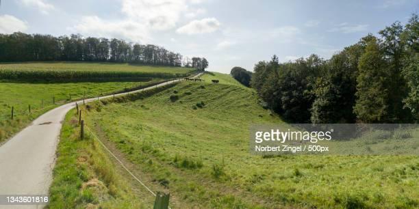 scenic view of road amidst trees against sky,hattingen,germany - norbert zingel stock-fotos und bilder