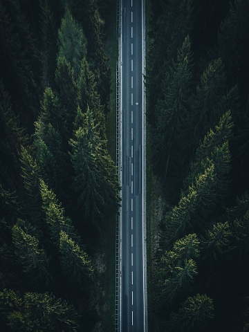 Scenic View Of Road Amidst Trees In Forest - gettyimageskorea