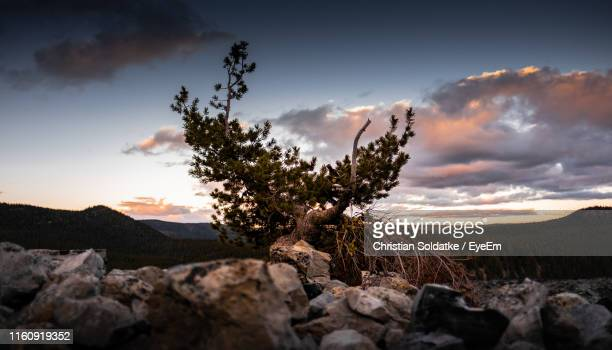 scenic view of rocks on field against sky during sunset - christian soldatke stock pictures, royalty-free photos & images