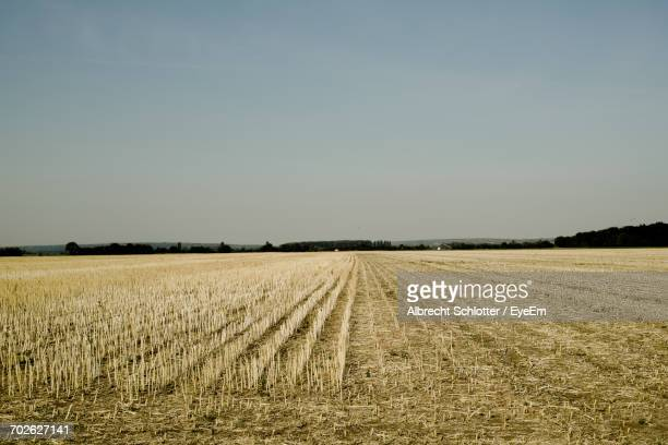 scenic view of rural landscape - albrecht schlotter stock photos and pictures