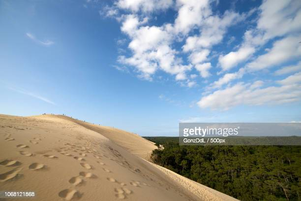 Scenic view of sand dune and forest