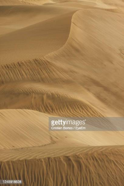 scenic view of sand dunes at desert - bortes stock pictures, royalty-free photos & images
