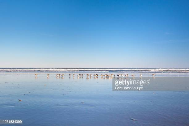 scenic view of sea against blue sky, kitty hawk, united states - kitty hawk beach stock pictures, royalty-free photos & images