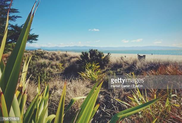 scenic view of sea against blue sky - harriet stock photos and pictures