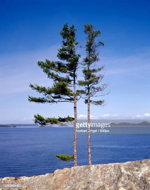 scenic view of sea against blue sky,vancouver island,canada - norbert zingel stock-fotos und bilder