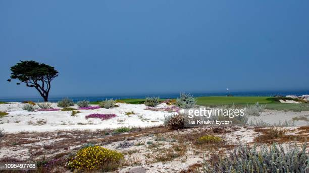 scenic view of sea against clear blue sky - monterey peninsula stock pictures, royalty-free photos & images