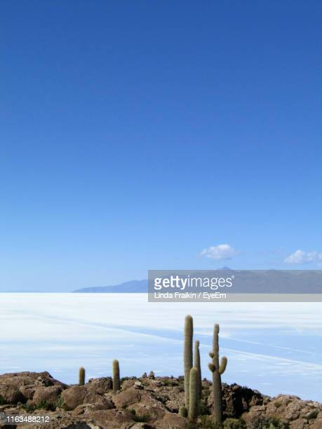 scenic view of sea against clear blue sky - linda fraikin stock pictures, royalty-free photos & images