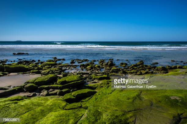 scenic view of sea against clear blue sky - matthias gaberthüel stock-fotos und bilder