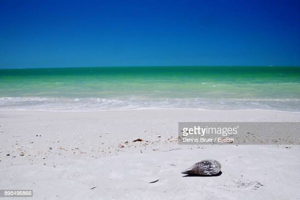 scenic view of sea against clear blue sky - fort myers beach stock photos and pictures