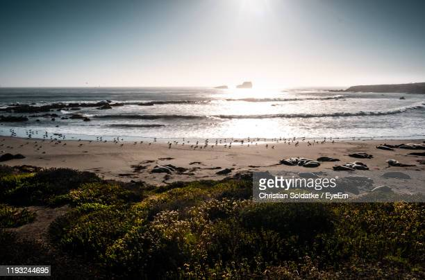 scenic view of sea against clear sky - christian soldatke imagens e fotografias de stock