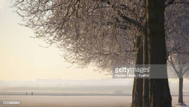 scenic view of sea against clear sky - paulien tabak stock pictures, royalty-free photos & images