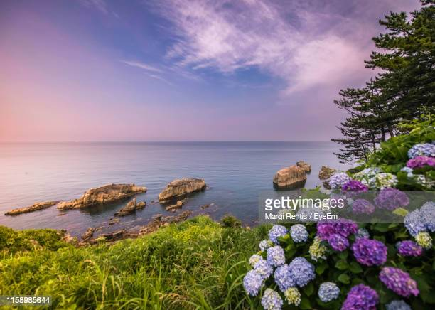 scenic view of sea against cloudy sky - 福井県 ストックフォトと画像