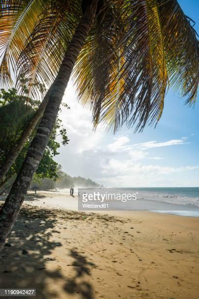 scenic view of sea against sky during sunny day, stonehaven bay, tobago, trinidad and tobago, caribbean - paisajes de trinidad tobago fotografías e imágenes de stock