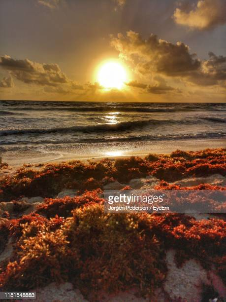 scenic view of sea against sky during sunset - isla mujeres stock pictures, royalty-free photos & images