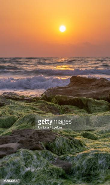 scenic view of sea against sky during sunset - sharon plain stock pictures, royalty-free photos & images