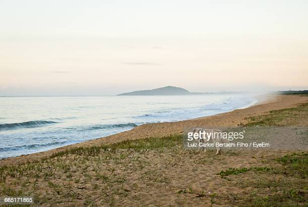 scenic view of sea against sky - filho stock pictures, royalty-free photos & images