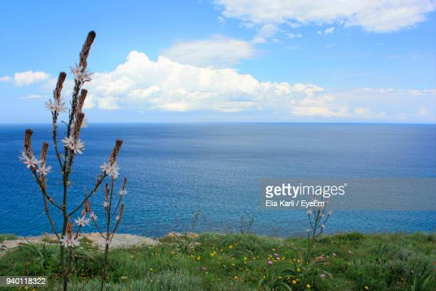 scenic view of sea against sky - elia karli stock-fotos und bilder