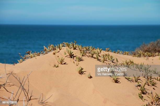 scenic view of sea against sky - ratnieks stock pictures, royalty-free photos & images