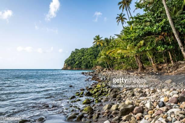 scenic view of sea against sky,martinique - isla martinica fotografías e imágenes de stock