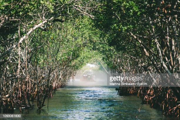 scenic view of sea against trees in forest - everglades national park stock pictures, royalty-free photos & images