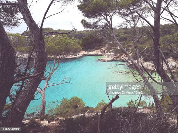 scenic view of sea against trees in forest - muro stock photos and pictures