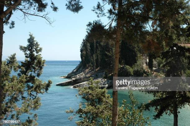 scenic view of sea and trees against clear sky - carolina fragapane stock pictures, royalty-free photos & images