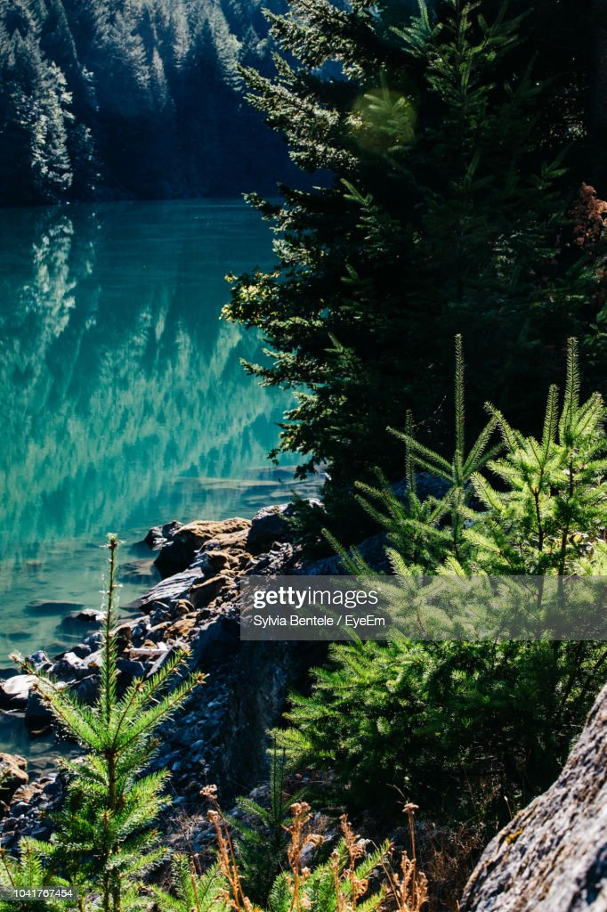 Scenic View Of Sea By Trees In Forest : Stock Photo
