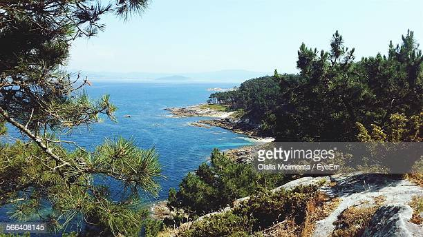 Scenic View Of Sea By Trees On Landscape