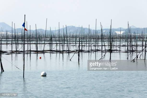 scenic view of sea weed farm against sky - gwangju stock pictures, royalty-free photos & images