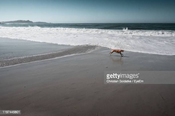 scenic view of sea with dog running at beach against sky - christian soldatke stock pictures, royalty-free photos & images