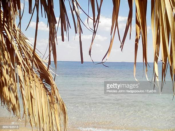 Scenic View Of Sea With Dry Palm Leaves On Foreground