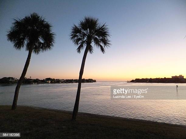 scenic view of sea with palm trees growing on shore during sunset - lucinda lee stock photos and pictures