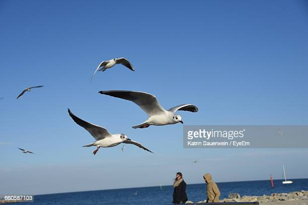 scenic view of seagull flying against clear sky - cinq animaux photos et images de collection