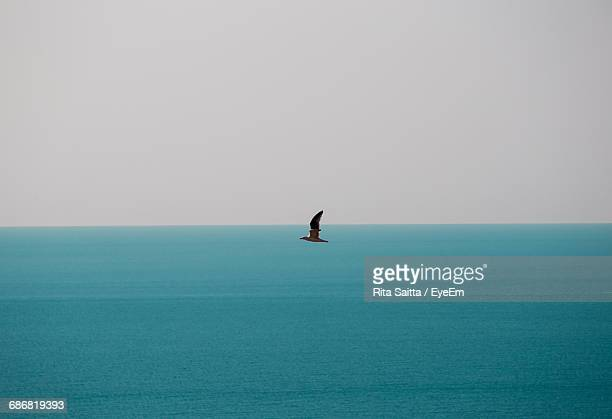 Scenic View Of Seagull Flying Over Sea Against Overcast Sky
