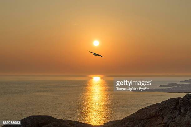 Scenic View Of Seagull Flying Over Sea During Sunset