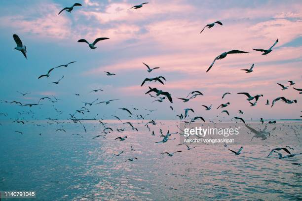 scenic view of  seagulls flying above sea against sky during sunset, thailand - bird stock pictures, royalty-free photos & images