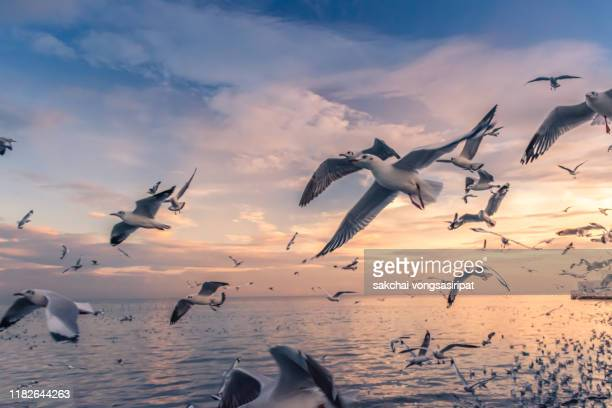 scenic view of seagulls flying above sea against sky during sunset - 水鳥 ストックフォトと画像