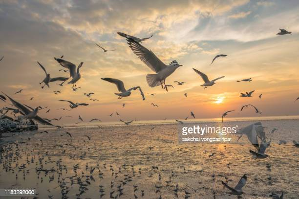 scenic view of seagulls flying above sea against sky during sunset - fauna selvatica foto e immagini stock