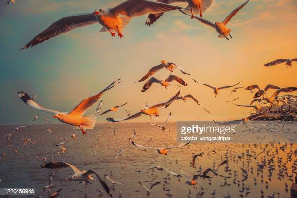 scenic view of seagulls flying above sea against sky during sunset - large group of animals stock pictures, royalty-free photos & images