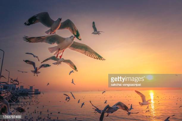scenic view of seagulls flying above sea against sky during sunset - 海洋性の鳥 ストックフォトと画像