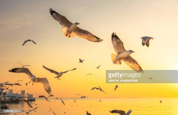 scenic view of seagulls flying on sea against sky during sunset, thailand, asia - zeevogel stockfoto's en -beelden
