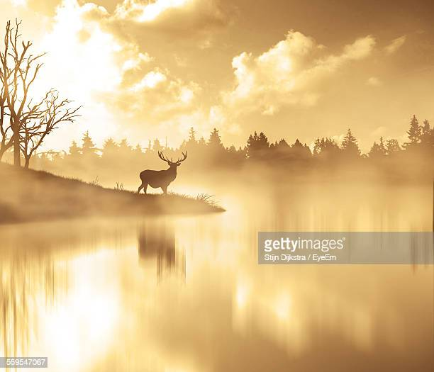 Scenic View Of Silhouette Deer By Lake In Foggy Weather During Sunset