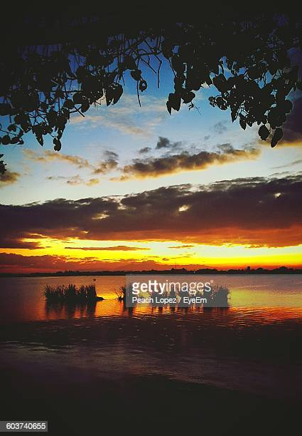 scenic view of silhouette plants in river against sky during sunset - lopez stock pictures, royalty-free photos & images