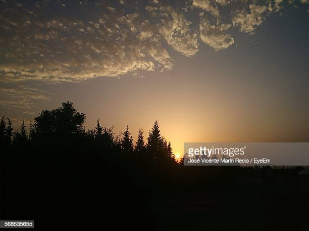 scenic view of silhouette trees growing in field against sky during sunset - エシハ ストックフォトと画像