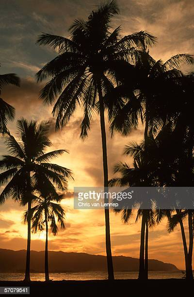 Scenic View of Silhouetted Palm Trees at Sunset