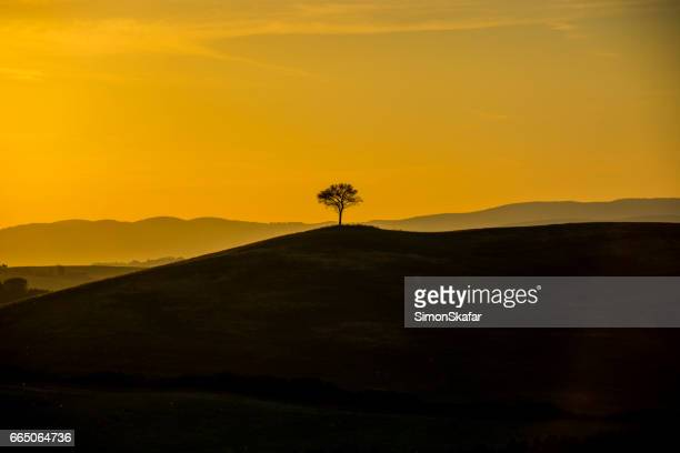 Scenic view of single tree on hill during sunset